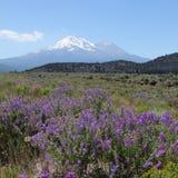 Mt. Shasta und Shastina Lizenzfreie Stockbilder