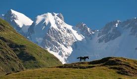Mt Shkhara, Georgia Caucasus, from Ushguli. View of Georgia`s highest peak, Mt Shkhara 5201 metres, from Ushguli royalty free stock image