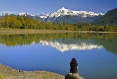 Mt Shuksan从面包师湖的后面视图有反射的 图库摄影