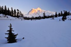 Mt Shuksan At Winter Sunset Stock Image