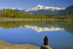 Mt Shuksan back view from baker Lake with Reflection Stock Photography