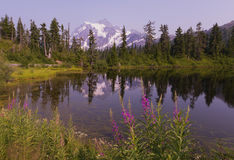 Mt Shuksan in the Summer Stock Image
