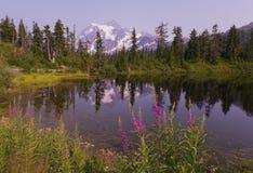 Mt Shuksan in the Summer Stock Image