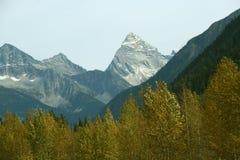 Mt Sir Donald, yellow poplar Stock Photo