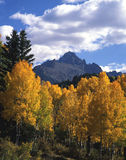 Mt. Sneffels & Aspens. A vertical image of Mount Sneffels with aspen trees in the foreground located in the Uncompahgre National Forest of Colorado Stock Image