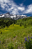 Mt. Sneffels giugno in #2 Fotografie Stock