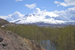 Mt. St. Helen and the surrounding vegetation. Royalty Free Stock Images
