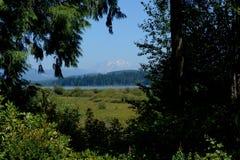 Mt St Helens как увидено от центра более низкого посетителя стоковая фотография