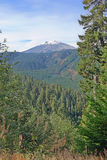 Mt St Helens - East Side Royalty Free Stock Photography