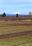 Mt. St. Helens and farm fields Oregon. Royalty Free Stock Photography