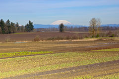 Mt. St. Helens and farm fields Oregon. Royalty Free Stock Photo