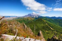 Mt St Helens Gifford Pinchot las państwowy Obrazy Stock