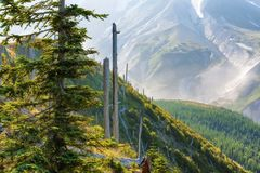 MT St Helens Gifford Pinchot National Forest royalty-vrije stock afbeelding