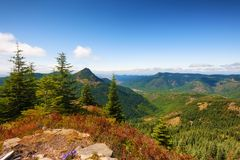 Mt. St. Helens Gifford Pinchot National Forest. Hiking in Gifford Pinchot National Forest near Mt St. Helens afford vast views such as this overlooking the Royalty Free Stock Photo