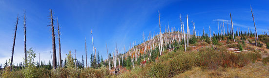 Mt St Helens Landscape Panorama Royalty Free Stock Photo
