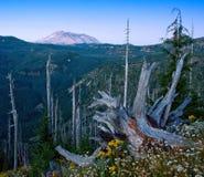 Mt. St. Helens, Washington State Stock Photo