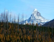 Mt St Nicolas, After the Fire Royalty Free Stock Images