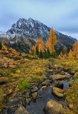 Mt. Stewart, Washington State. Mt. Stewart provides the backdrop with Autumn Larch trees in Washington State Stock Images