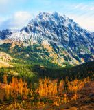 Mt. Stewart, Washington State. Mt. Stewart provides the backdrop with Autumn Larch trees in Washington State stock image