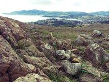 Mt tam royaltyfri bild