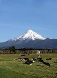 Mt Taranaki Stockfotos