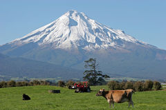 Mt Taranaki and Farm land. Farm land in front of Mt Taranaki, Mt Egmont on a bright sunny day Royalty Free Stock Photos