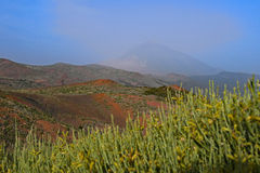 Mt Teide - Terenife, isole Canarie Fotografie Stock Libere da Diritti