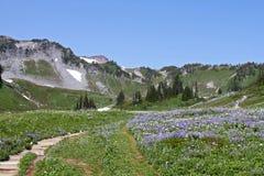 Mt Trees och gräs Arkivfoto
