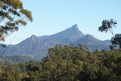 Mt Warning in morning light Royalty Free Stock Images