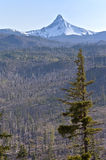 Mt. Washington and a burned forest. Royalty Free Stock Photo