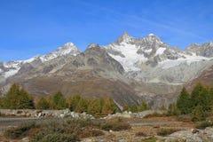 Mt Weisshorn y larchs amarillos Foto de archivo
