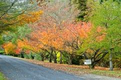 Mt Wilson Autumn Scene Royalty Free Stock Images