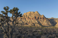 Mt Wilson Dawn an rotem Felsen-Schlucht iin Nevada Stockfotografie