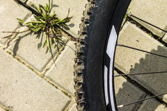 MTB bicycle wheel Stock Images