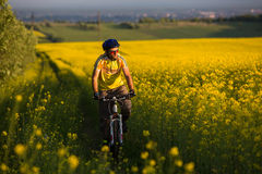 Mtb biker is cycling Stock Photography