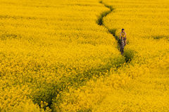 Mtb biker is cycling. In yellow rapeseed field Royalty Free Stock Photo