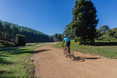 MTB Cyclist Dirt Track Trees Stock Photography