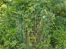 Mteal bur runt om träd och växter Arkivfoto