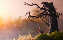 Mötesoluppgång med den gammala treen, myrasagor Royaltyfri Fotografi