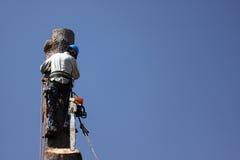 Métiers de dépose d'arbre Photo libre de droits