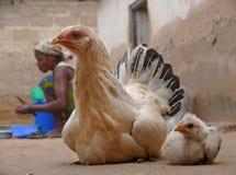 MTWARA Tanzania - December 3, 2008: byn. Feg chicke Fotografering för Bildbyråer