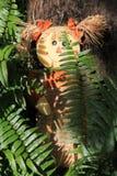 Muñeca del espantapájaros Foto de archivo libre de regalías