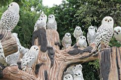 Muñeca linda de la arcilla de los búhos en el jardín Imágenes de archivo libres de regalías