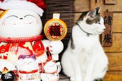 Muñeca linda del gato y el sentarse en Taiwán Imagen de archivo libre de regalías