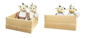 Muñecas del bebé del búfalo en caja Foto de archivo