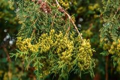 Muśnięcie zielony drzewo Zdjęcia Royalty Free