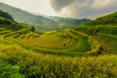Mu Cang柴越南美丽的露台的米 免版税库存照片