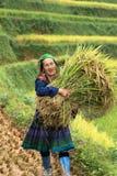 Mu Cang柴,越南- 2016年9月17日:少数Hmong妇女画象收获在露台的稻田的米 库存照片