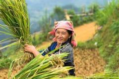 Mu Cang柴,越南- 2016年9月17日:少数Hmong妇女画象收获在露台的稻田的米 免版税图库摄影