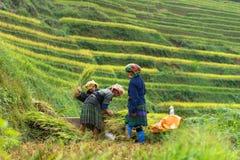 Mu Cang柴,越南- 2016年9月18日:收获在稻大阳台的Hmong妇女米在Mu Cang柴区,越南 免版税库存照片